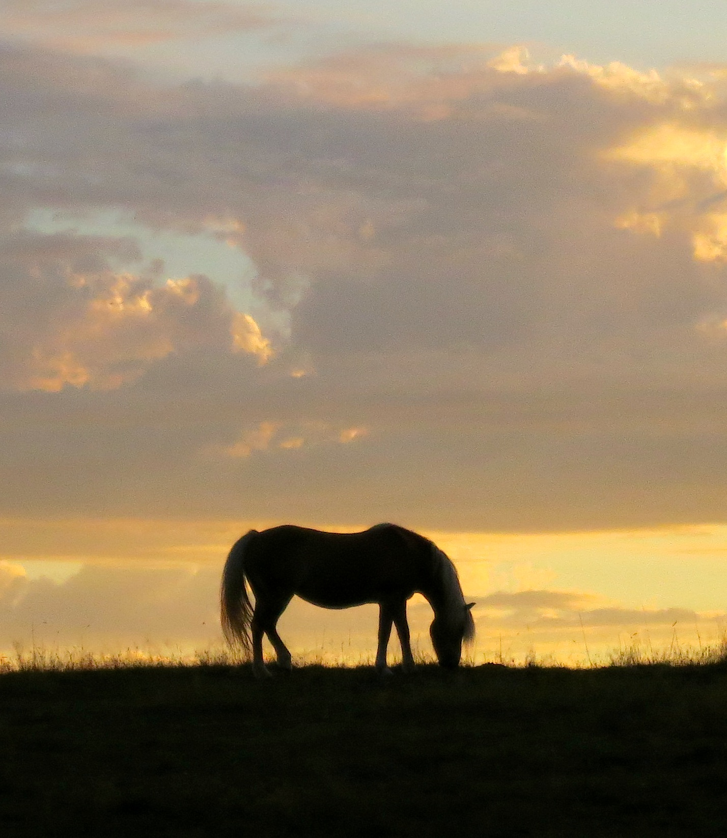 sunset92horses4
