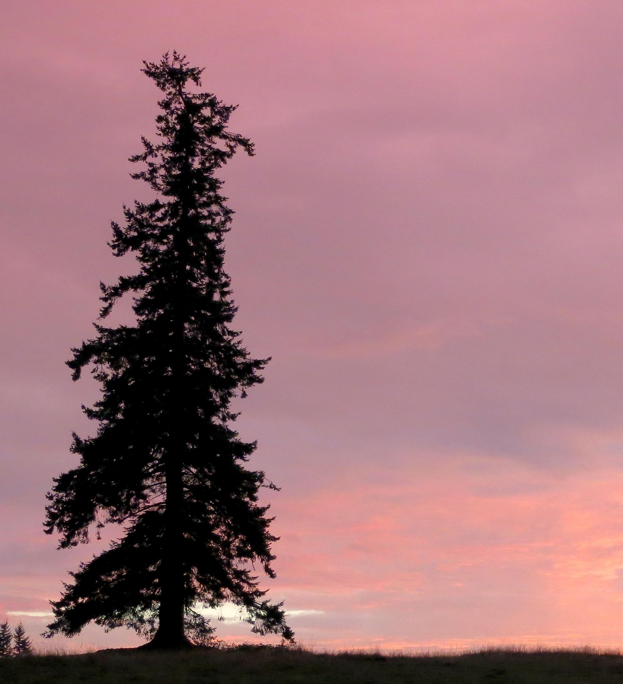 sunset964