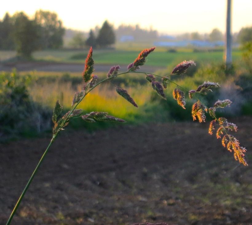 sunsetgrasscentral