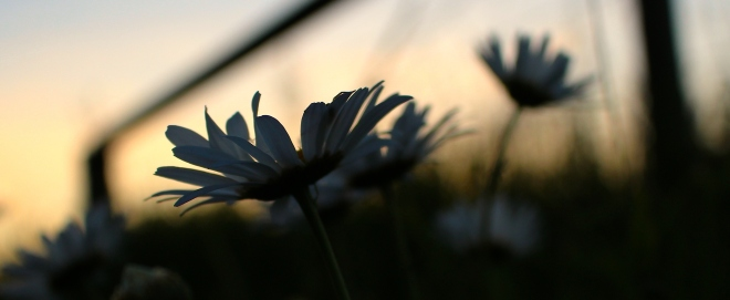 sunsetgrasses12