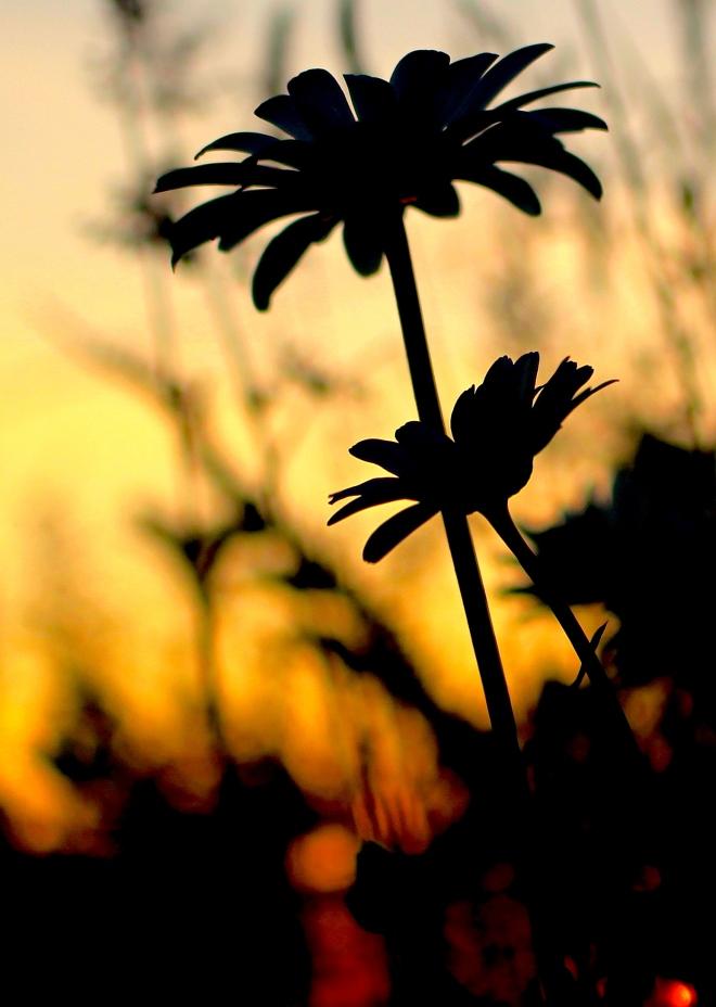 sunsetgrasses6