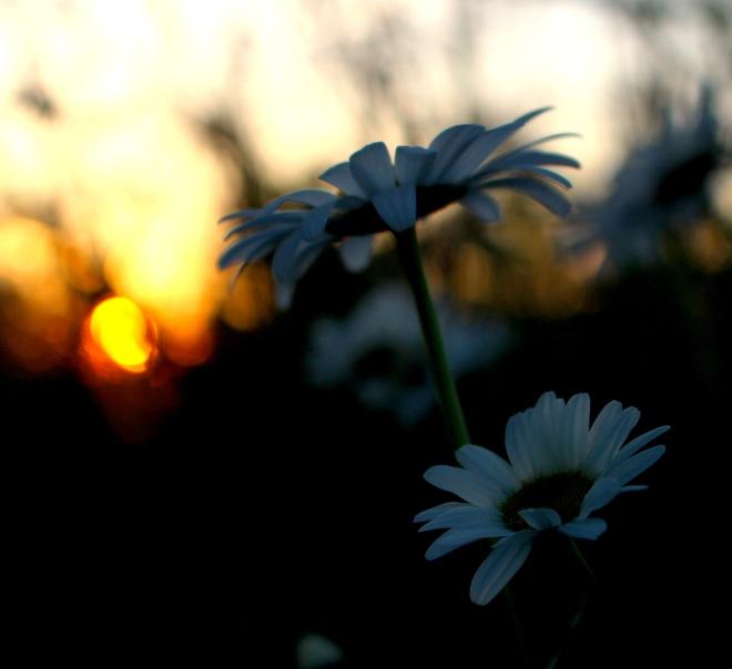sunsetgrasses7