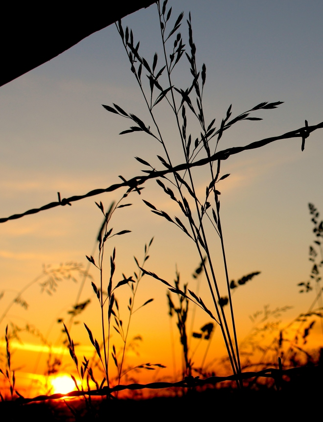 sunsetgrasses8