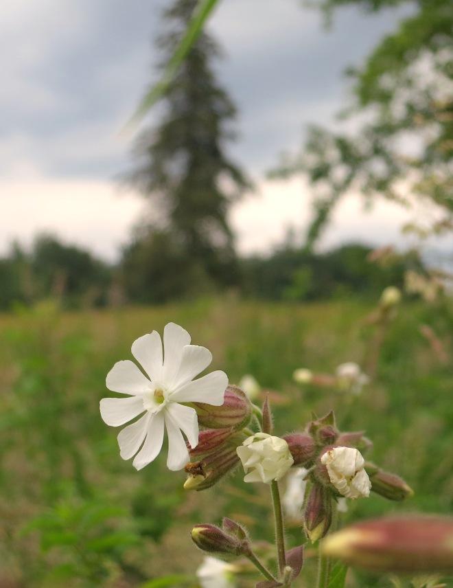 weedflowertree
