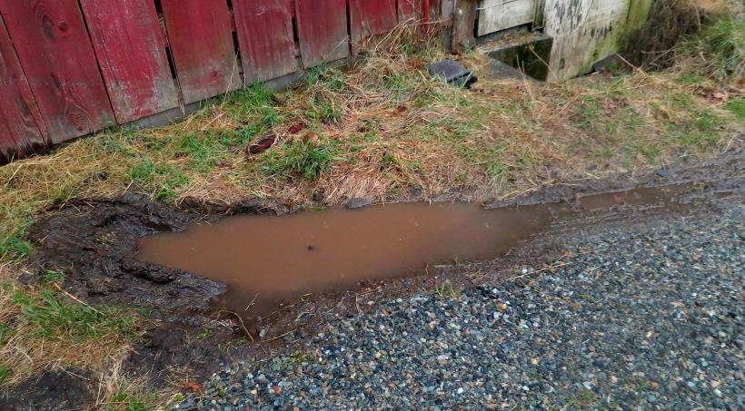 mud36141