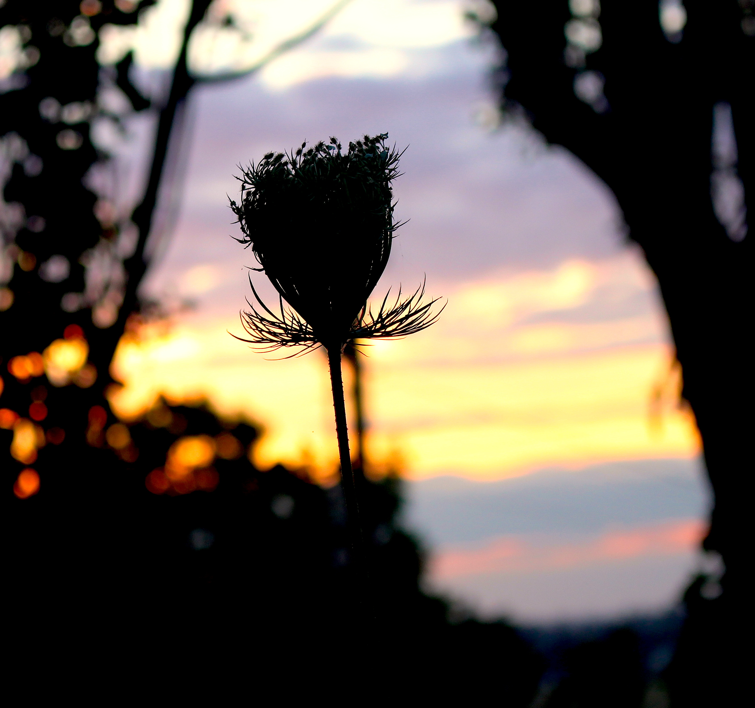sunset7221410