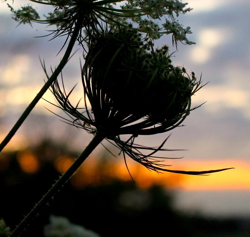 sunset722148