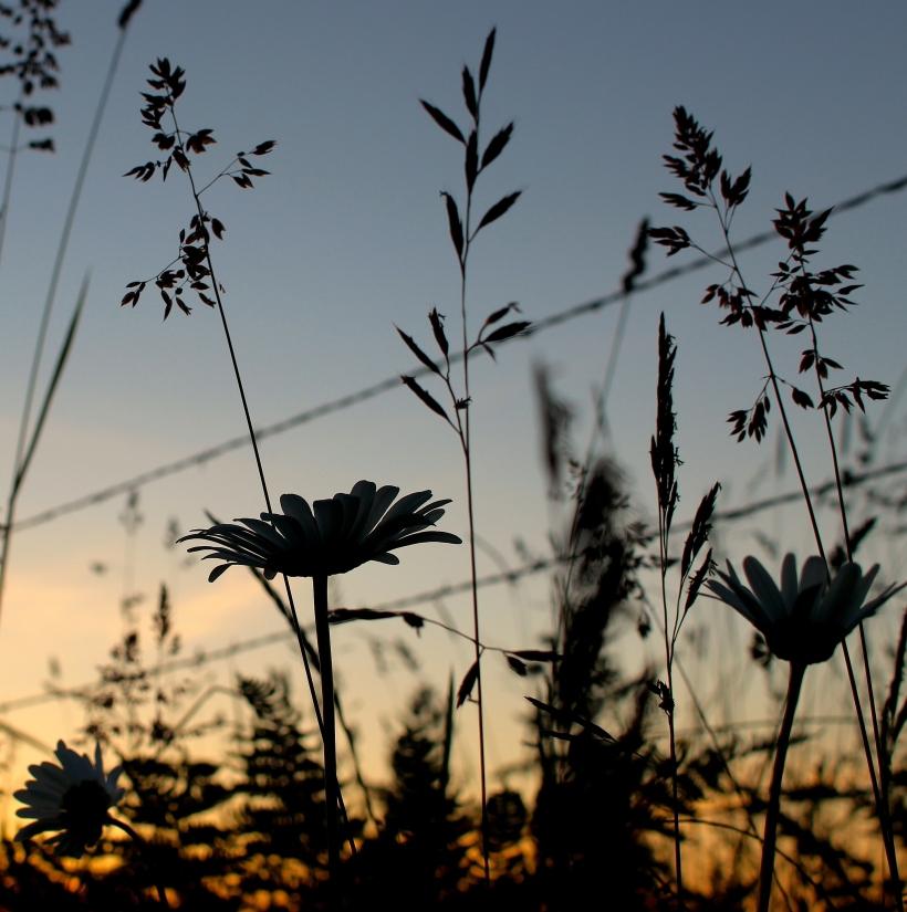 sunsetgrasses10