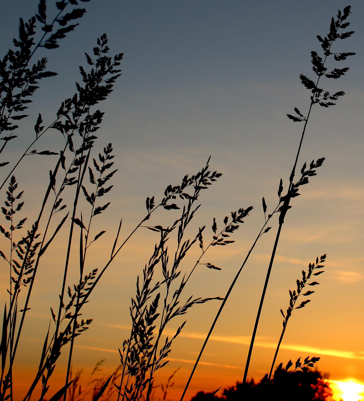 sunsetgrasses9