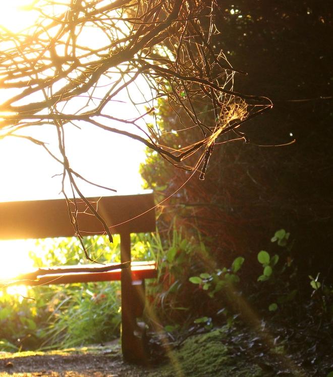 sunsetpnp14