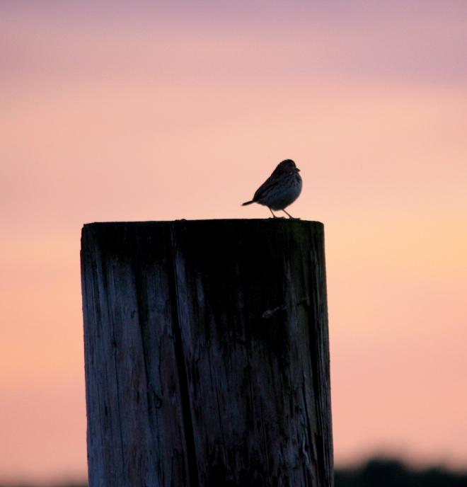 birdonpostrodenberger