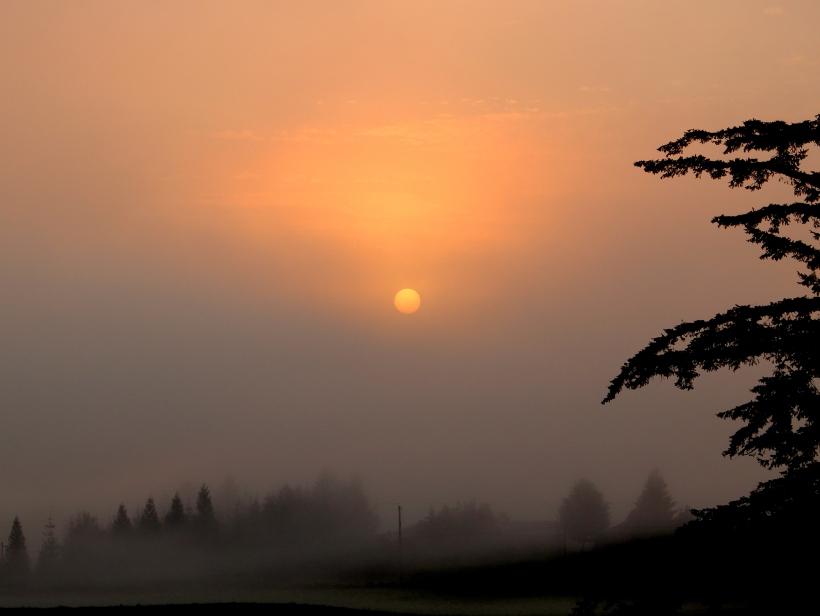 sunrise824142