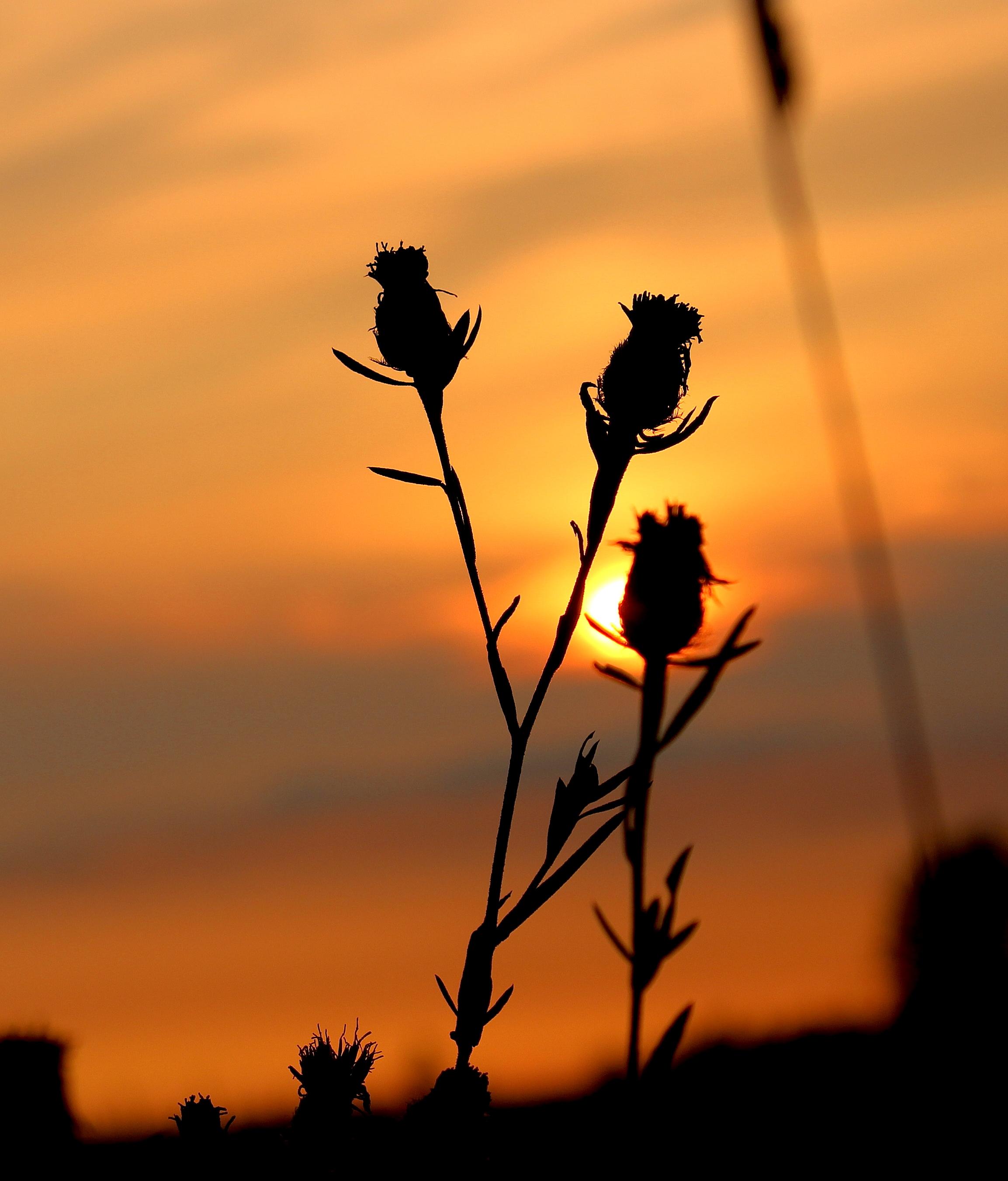 sunset8164