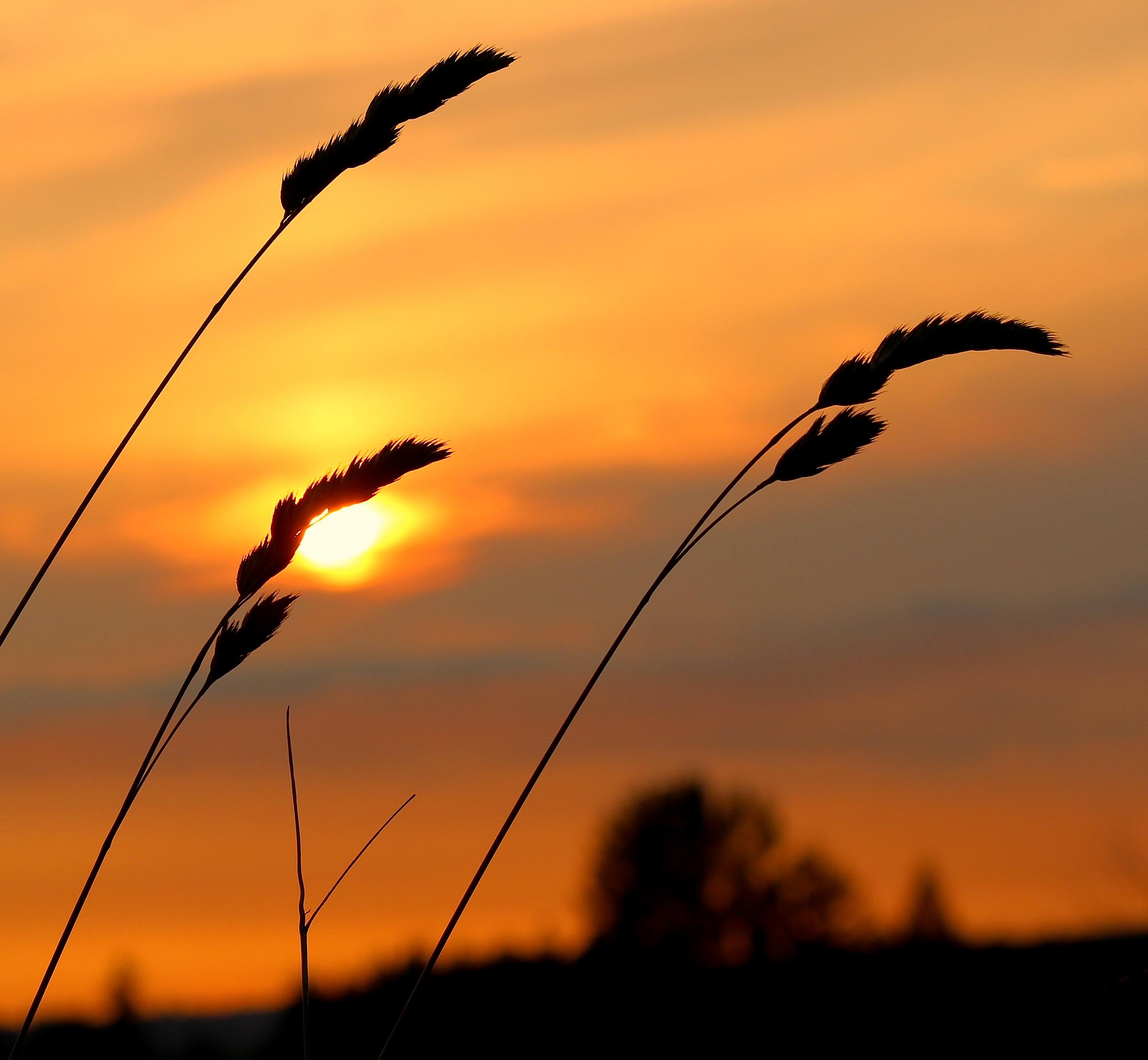 sunset8166