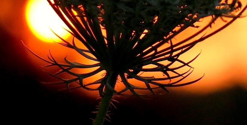 sunset8168