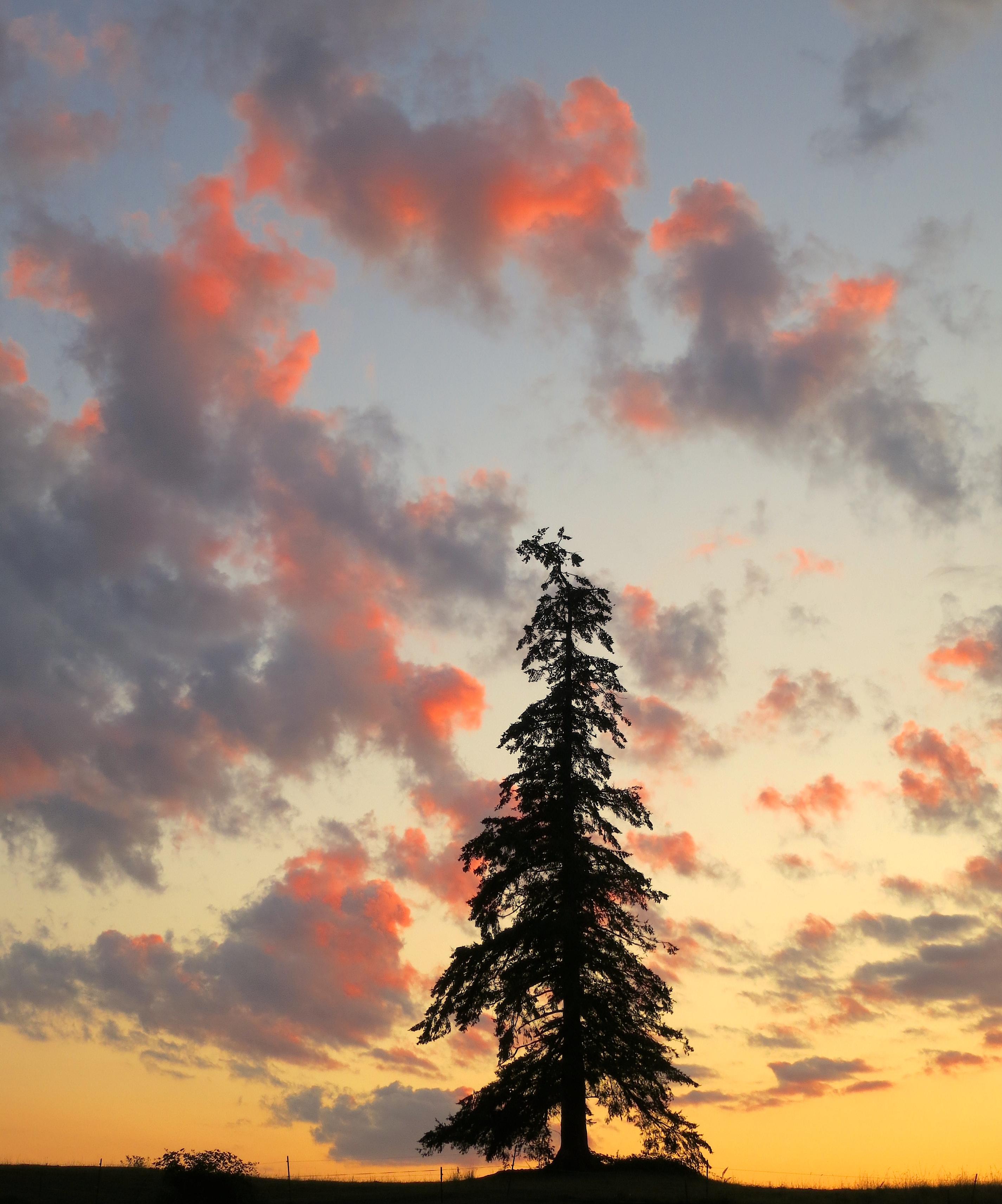 sunset82014