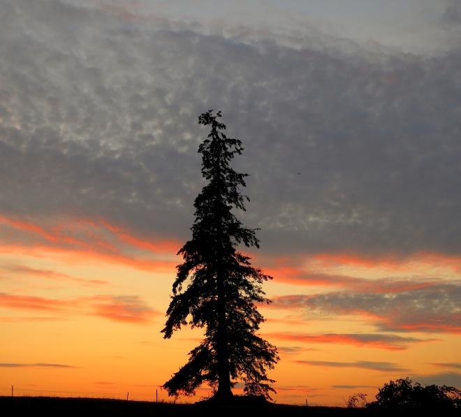 sunset823143