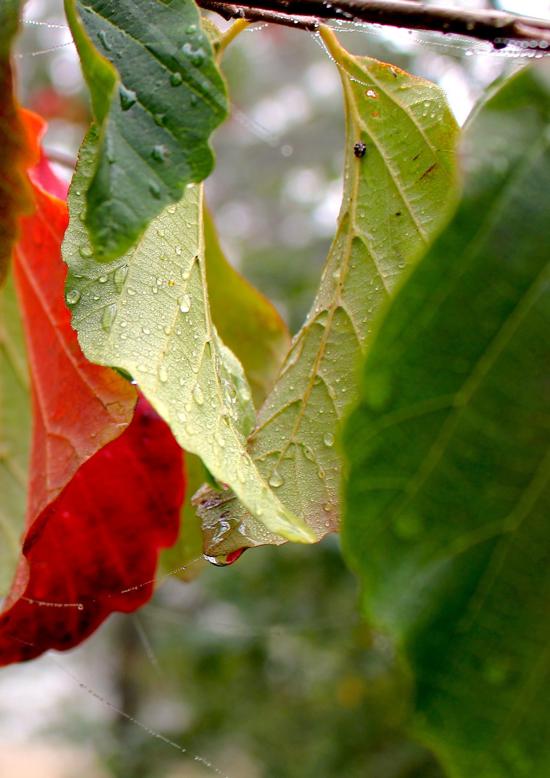 autumn9271413