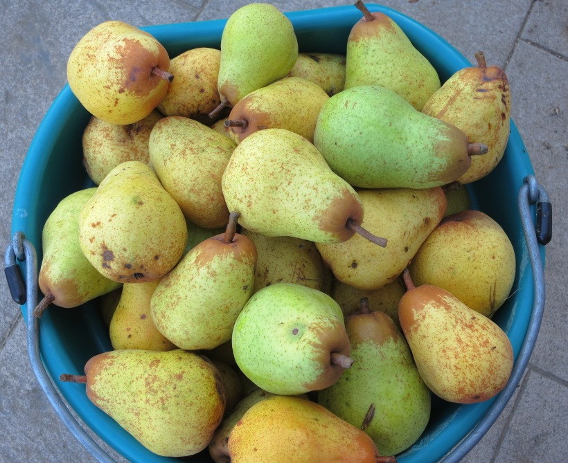 pears9614