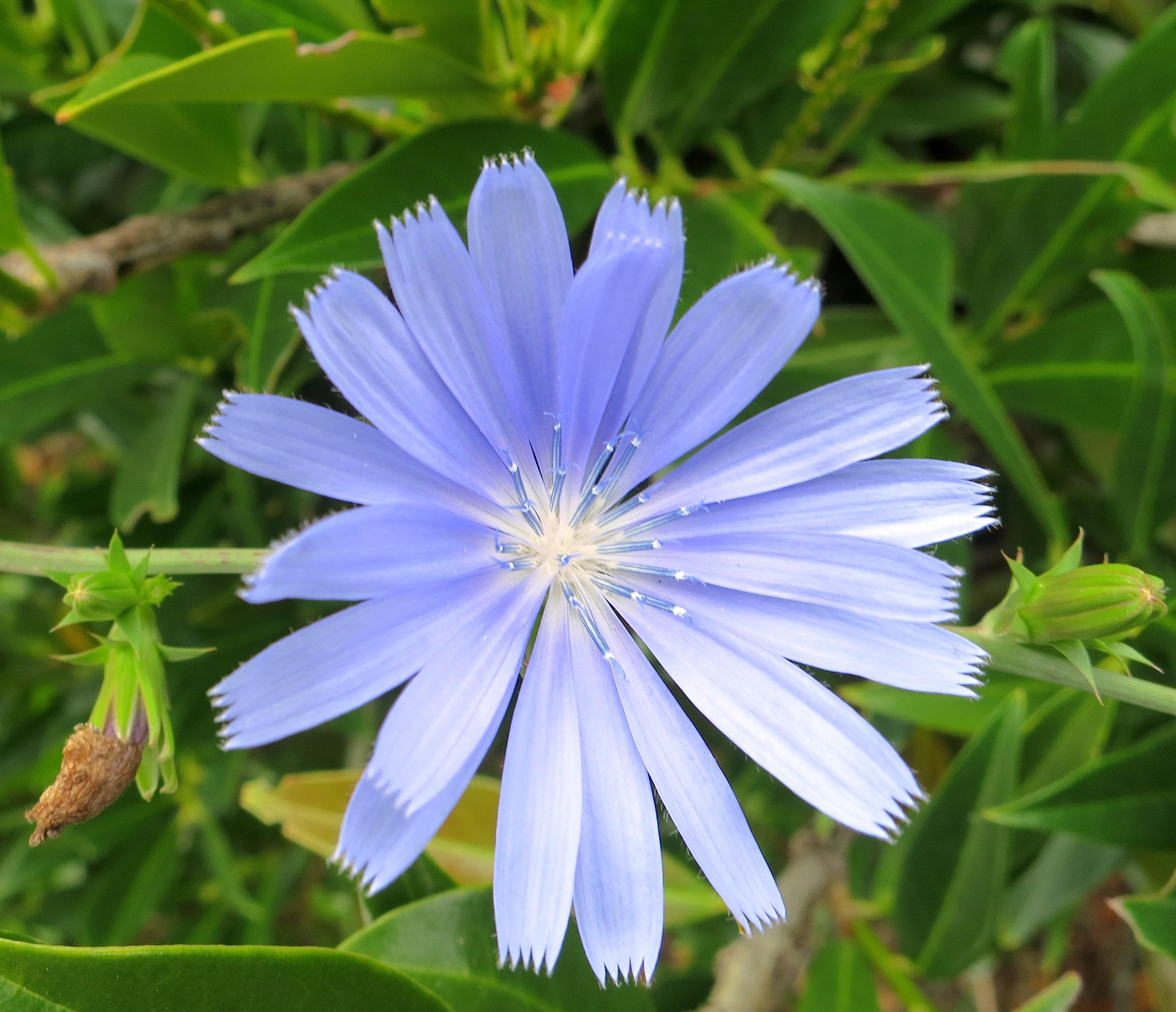 wwublueblossom