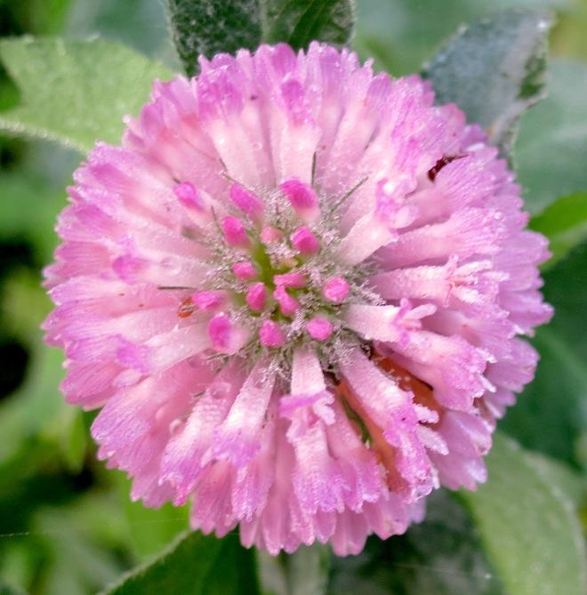 clover9281