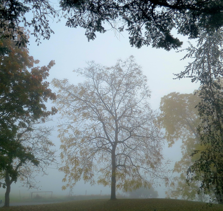 mistyfrontyard