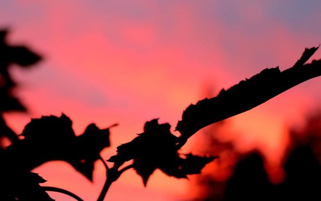 sunriseleaf