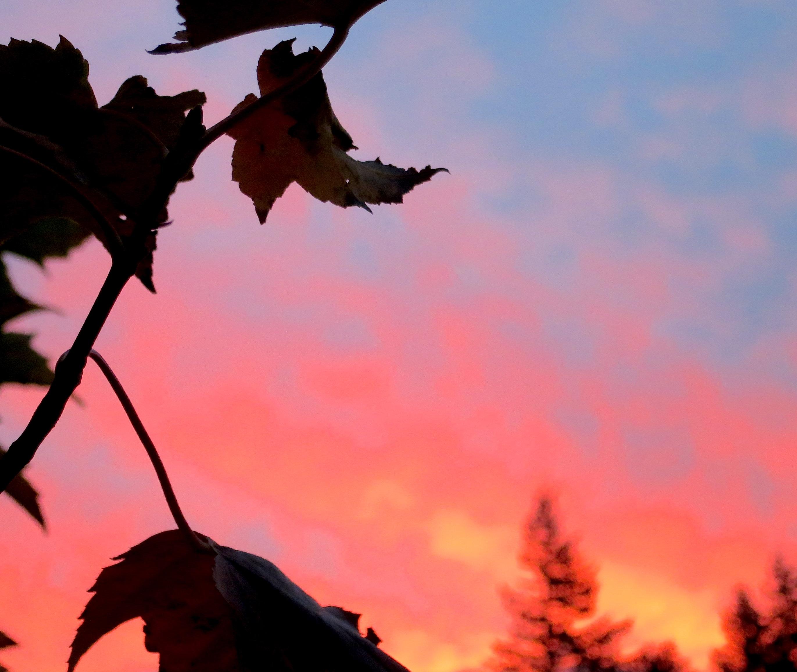sunriseleaf2