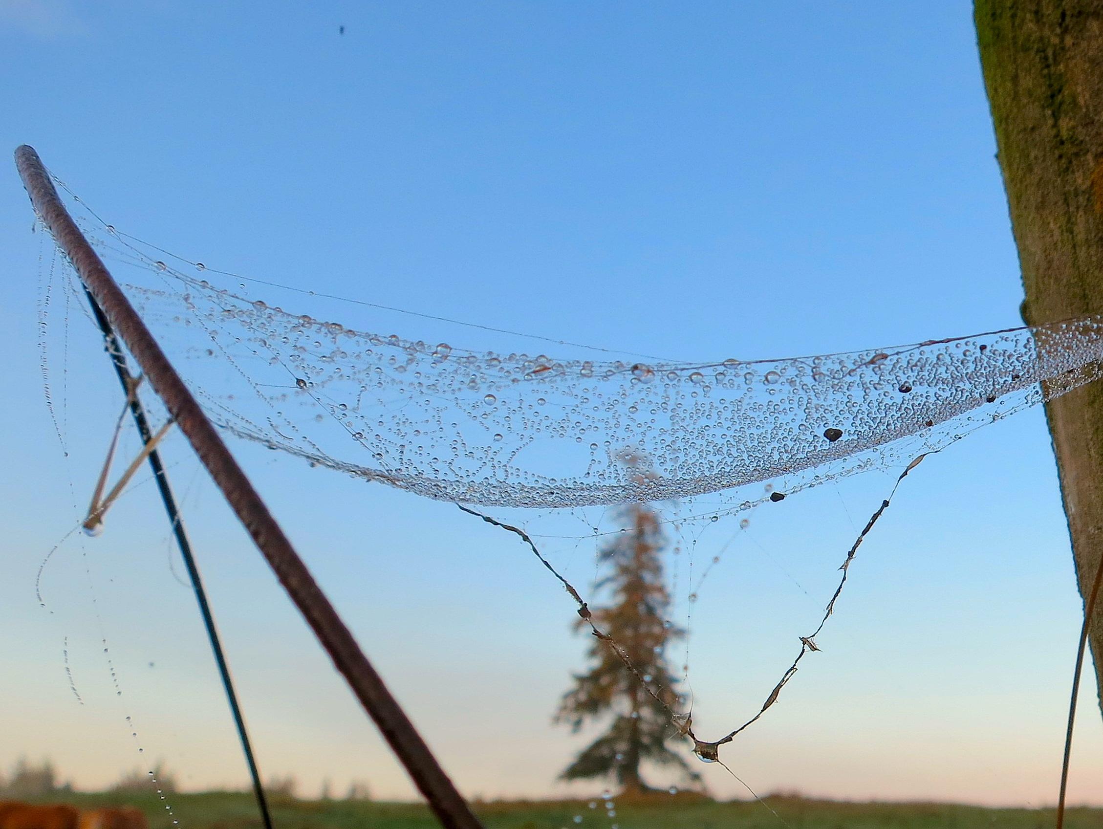 wetweb2