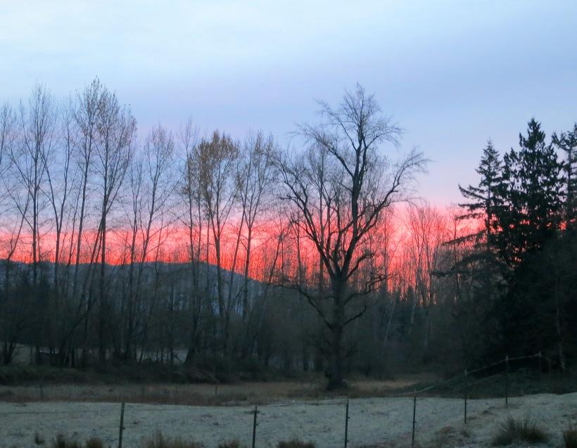dawn1118