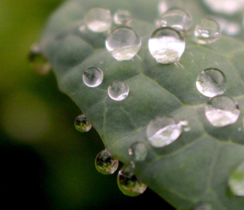 raindrops1126