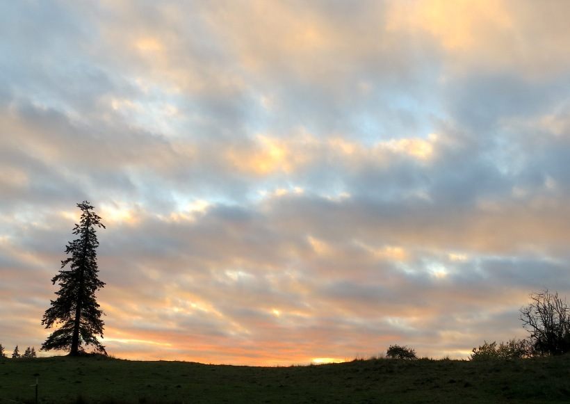 sunset111141