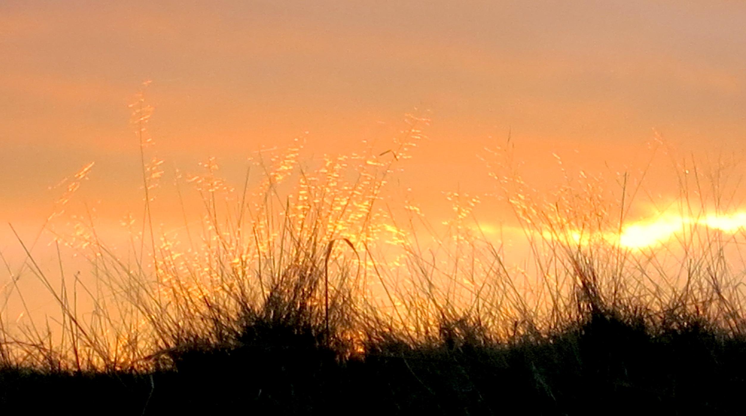 sunset111142