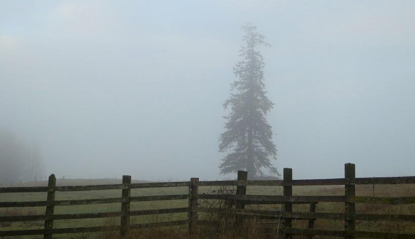 fog122814