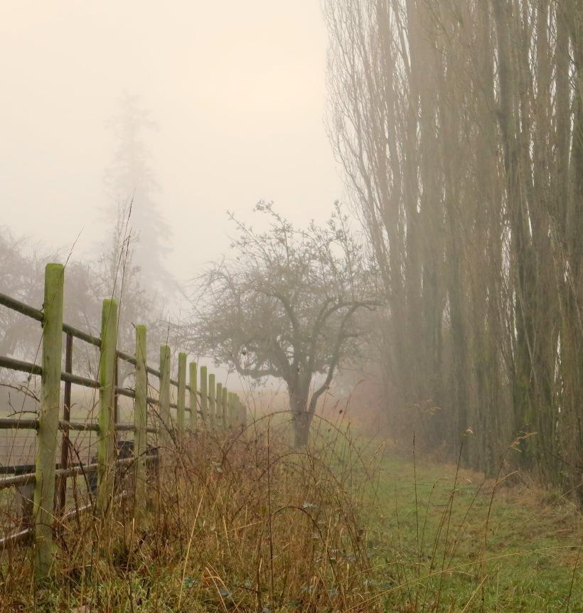 fog1228141