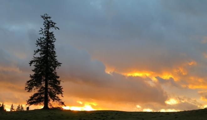sunset1224142