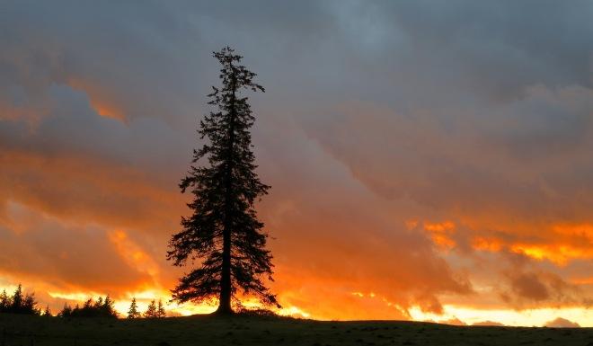 sunset1224145