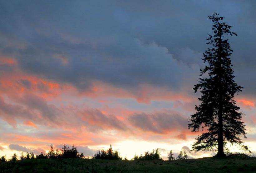 sunset1224147