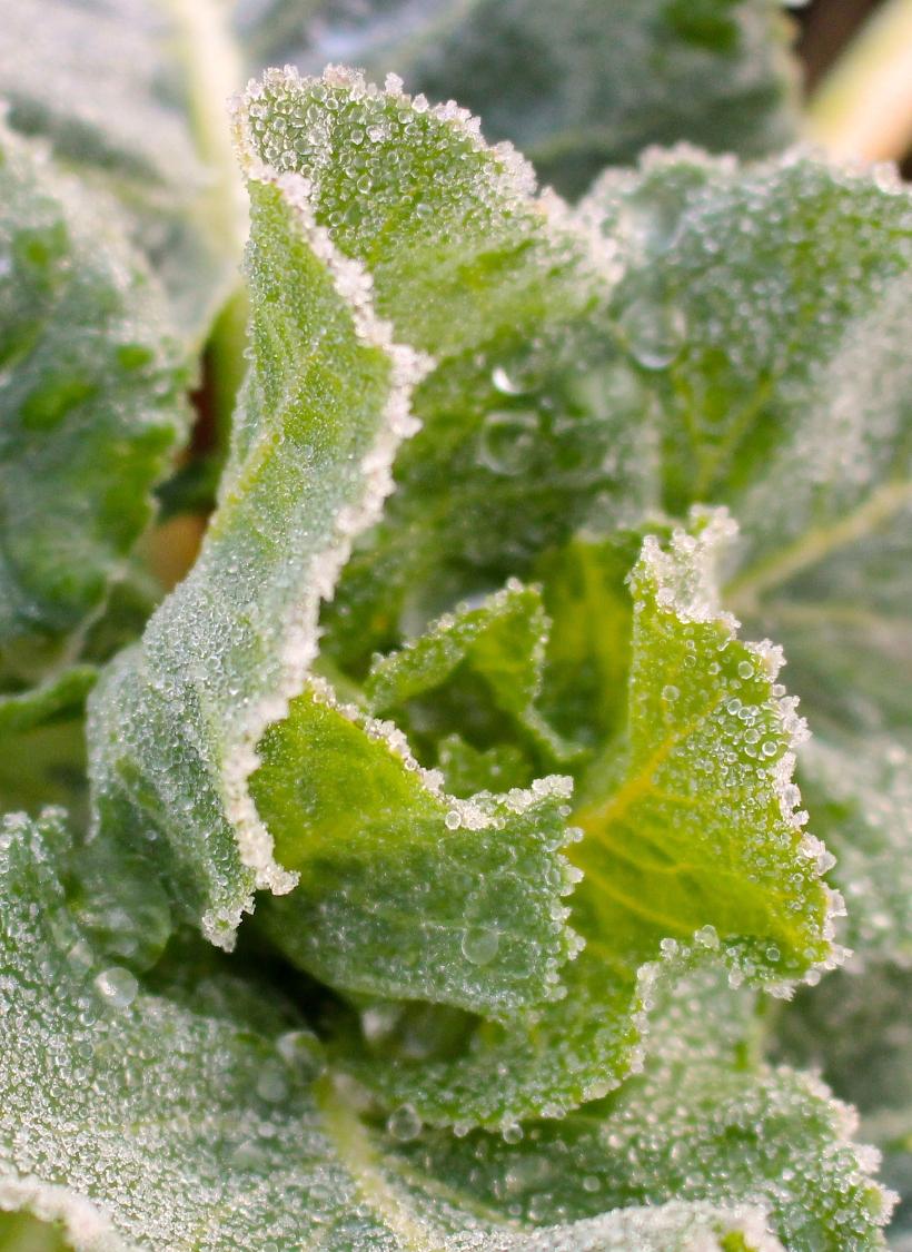 frozenbrussels1
