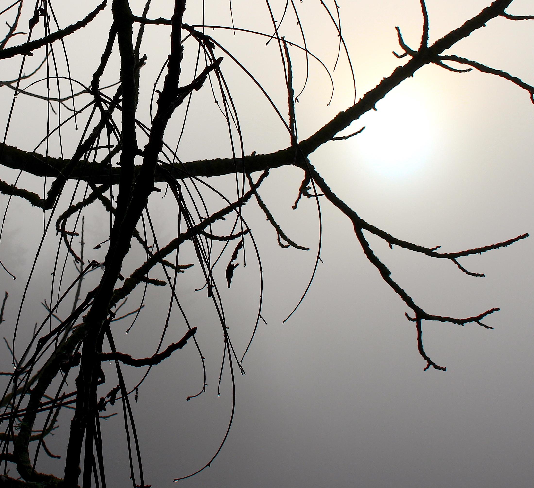fogdrops