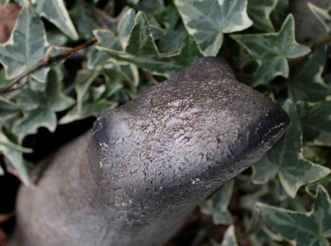 graystonefrog
