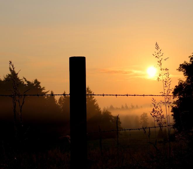morning528151