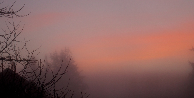 morningfog12615