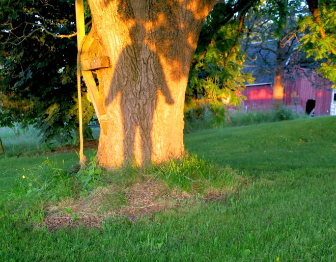 shadowselfie