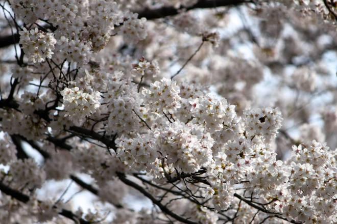 photo by Nate Gibson from Higashi-Kurume, Tokyo