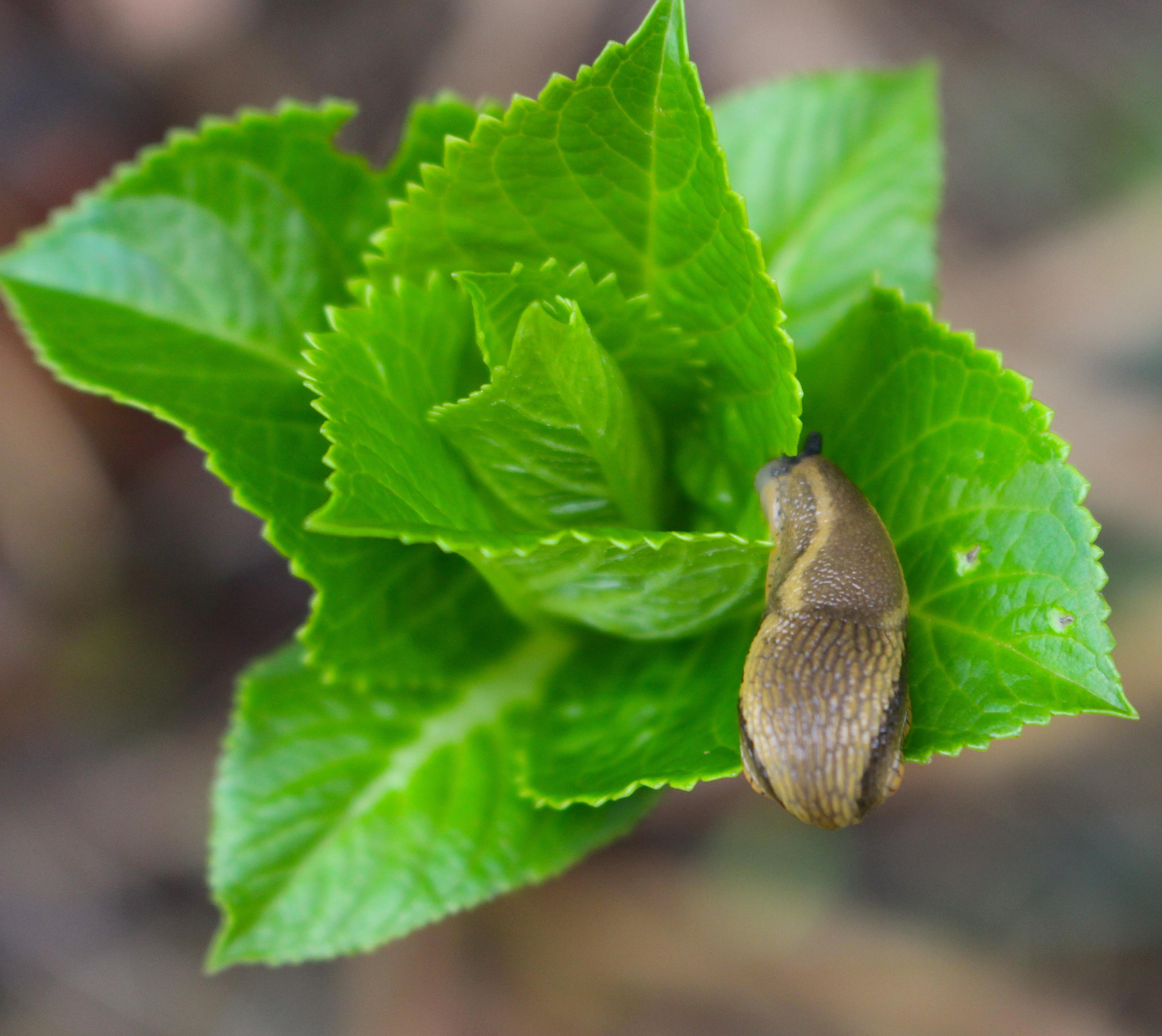 slugspring
