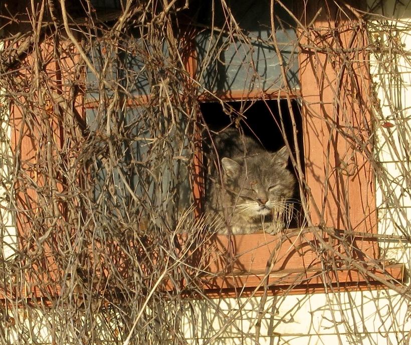 catperch