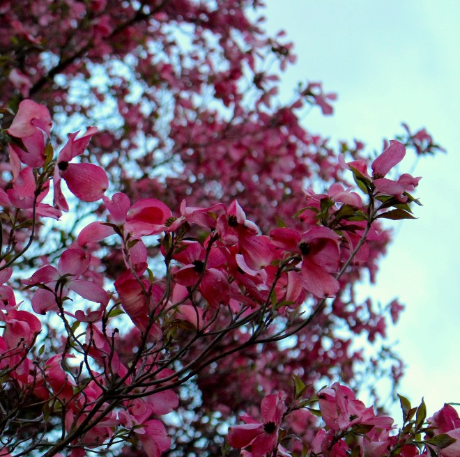 dogwoodbranches