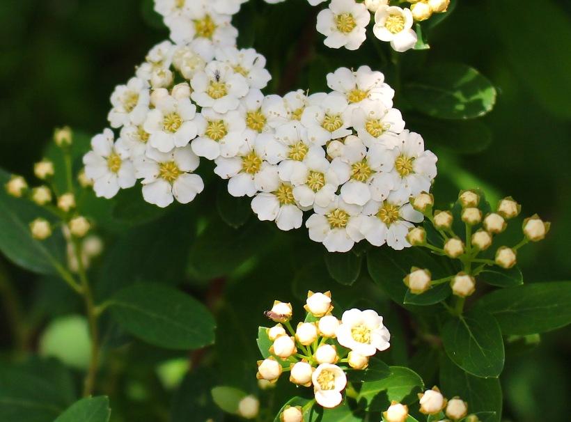 cedarsprings35