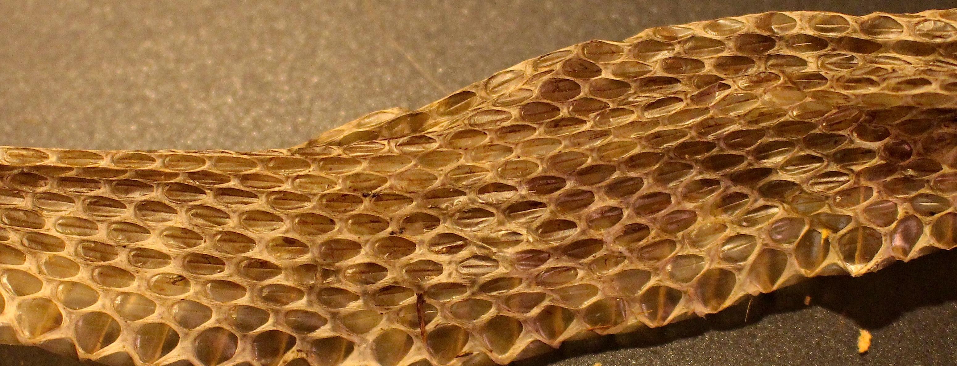 snakeskin5